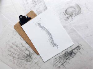 ¿Cómo funciona la columna vertebral?
